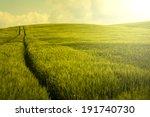 Vintage Barley Field.