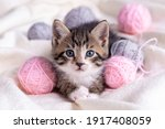 Small photo of Striped cat playing with pink and grey balls skeins of thread on white bed. Little curious kitten lying over white blanket looking at camera.