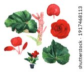 watercolour illustration of... | Shutterstock . vector #1917468113