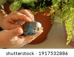 A Budgie Sits On The Palm Of A...
