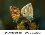 wonderful world of wild...   Shutterstock . vector #191766200