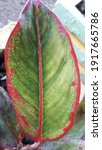 Small photo of Yank beautiful becorak leaf motif with the beauty of the atmosphere around the outdoor