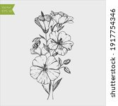 Flax Flower And Seed Vector...