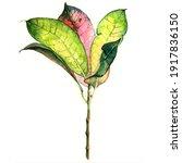 watercolor illustration of... | Shutterstock . vector #1917836150