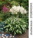 The Garden Compositions With...