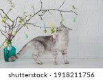 Grey Cat Playing With Small...