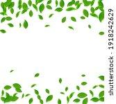 falling green leaves. fresh tea ... | Shutterstock .eps vector #1918242629