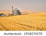 Grain Silos In Field. A Wheat...