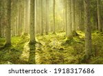 Majestic Evergreen Forest At...