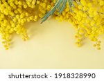 Mimosa Or Silver Wattle Yellow...