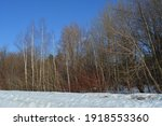 forest landscape in march. bare ... | Shutterstock . vector #1918553360