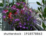beautiful garden on the balcony ... | Shutterstock . vector #1918578863