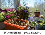 beautiful container garden on... | Shutterstock . vector #1918582340