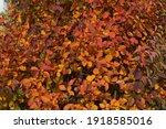 bright purple  red and orange... | Shutterstock . vector #1918585016