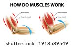 movement process of the arm... | Shutterstock .eps vector #1918589549