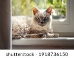 furry cat relaxing on window... | Shutterstock . vector #1918736150