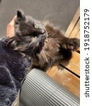 Small photo of brazen black cat who is taken by the scruff of his neck