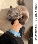Small photo of brazen glossy cat climbs into his arms