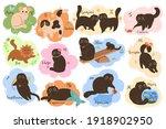 vector collection of twelve... | Shutterstock .eps vector #1918902950