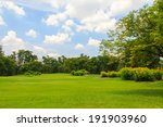 Green Trees In Beautiful Park...