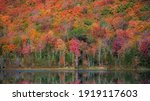 Bright Autumn Trees By The Lake ...