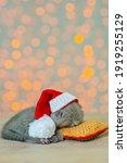 Fluffy Gray Kitten Sleeps At...