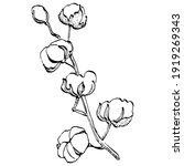 cotton flower. floral botanical ... | Shutterstock .eps vector #1919269343