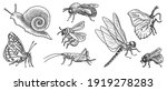 vector drawing set of insects   ...   Shutterstock .eps vector #1919278283