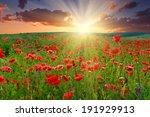 summer landscape  wild poppy... | Shutterstock . vector #191929913