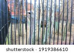 Ostrich Sits Behind Bars In A...