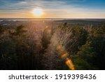 Treetops With Sunbeams. Sunrays ...