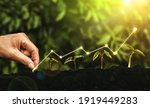 Hand Planting Seedling Growing...
