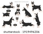 miniature schnauzer dogs in... | Shutterstock .eps vector #1919496206