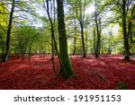 Stock photo autumn selva de irati fall beech jungle in navarra pyrenees of spain 191951153