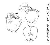 apple fruit vector drawing of... | Shutterstock .eps vector #1919564939