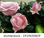 Pink Roses Covered By Raindrops....