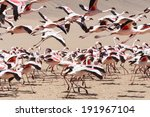 Flamingo Bird In Flight At...