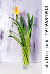 Small photo of Yellow Narcissus flowers (Daffodil, Daffodils, Trumpet, Corbularia, Hermione) with green leaves on a silver textured background, beauty in contrast and minimalism