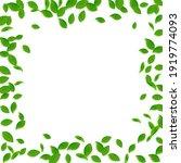 falling green leaves. fresh tea ... | Shutterstock .eps vector #1919774093
