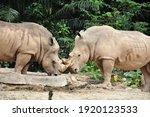 Two Rhino Facing Together...
