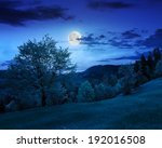 summer; landscape. forest on the meadow near the forest on hillside of mountain in fog at night in moon light - stock photo