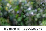 Silhouette Of The Spider On The ...