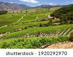 Vineyards Producing Chilean...
