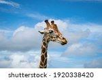 Giraffe Head Floating In The Sky