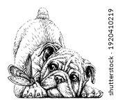 bulldog. wall sticker. graphic  ...   Shutterstock .eps vector #1920410219