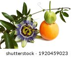 Passion Flower And Fruit...