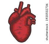 Human Heart Anatomy. Sketch...