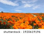 Poppy Seed Reserve In...