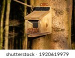 Nuts In A Red Squirrel Feeder...