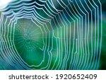 Macro Spider Web In The Dew...